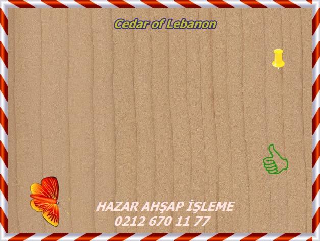 cedar-of-lebanon-s