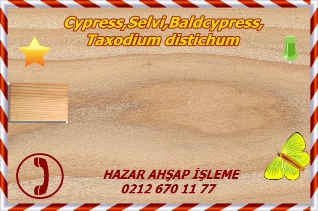 cypress12