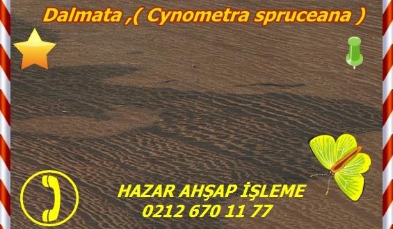 Dalmata ,( Cynometra spruceana ),juta pororoca, jutairana,jutairana vermelha,mangle duro