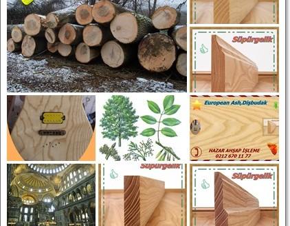 Dişbudak Ağacının Özellikleri ve Ayasofya Camisindeki Gizemi