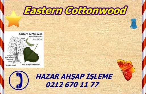 Eastern Cottonwood,Populus deltoides