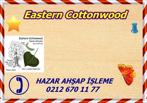 eastern-cottonwood