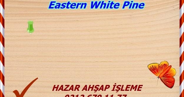 eastern-white-pine