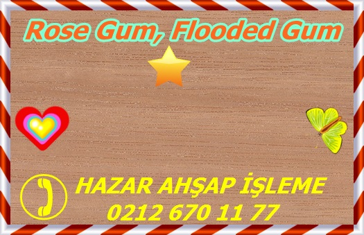 flooded-gum-ps