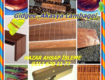 Gidgee ,Akasya cambagei, A. pruinocarpa