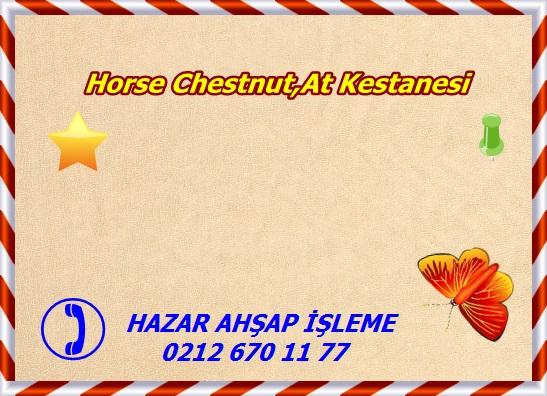 horse-chestnut-s