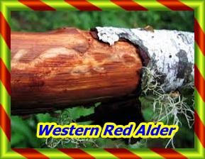 imagesWestern Red Alder