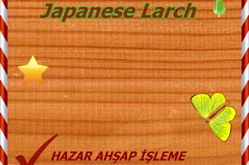 larch-japanese (1)o