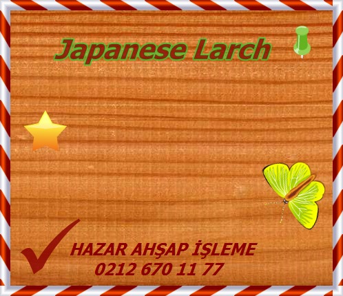 larch-japanese (1)o