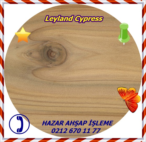 leyland-cypress-sealed