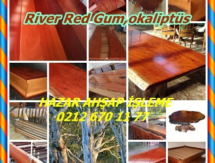 Nehir Red Gum,River Red Gum,okaliptüs