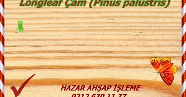 longleaf-pine