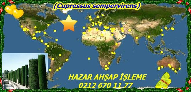 map_of_Cupressus_sempervirens