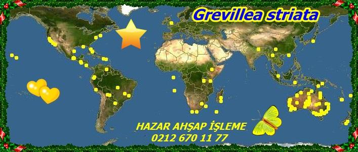 map_of_Grevillea99