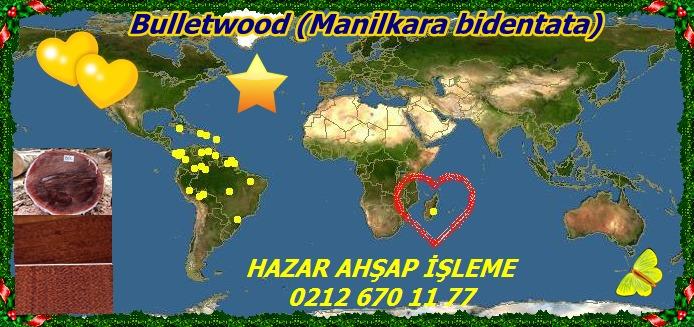 Manilkara_bidentata123