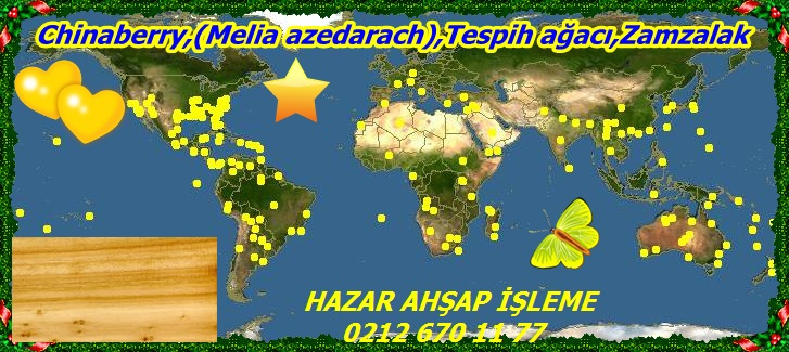 map_of_MeliaChinaberry,(Melia azedarach),Tespih ağacı,Zamzalak