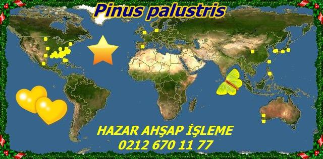 map_of_Pinus_palustris52