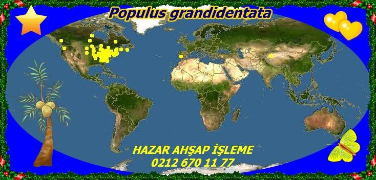 map_of_Populus_grandidentata