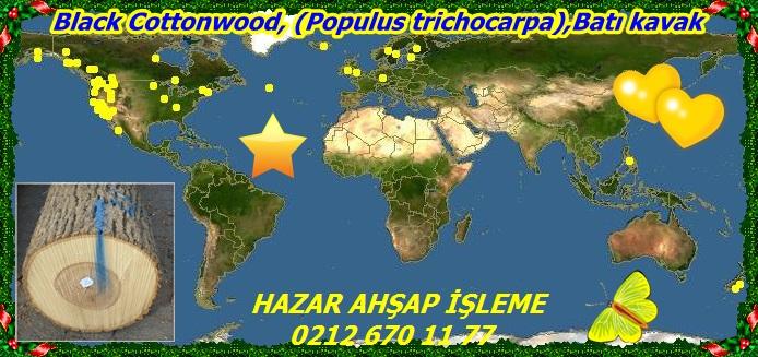 map_of_Populus_trichocarpa