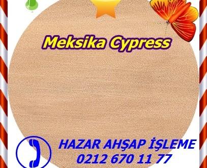 Meksika Cypress,Goa Meksika ,Cupressus lusitanica