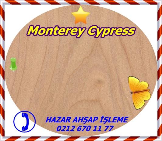 monterey-cypress-wt (1)