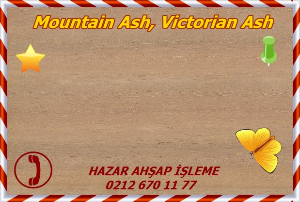 mountain-ash-s