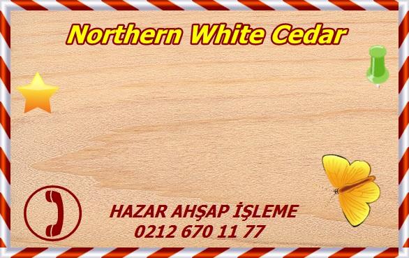 northern-white-cedar-1