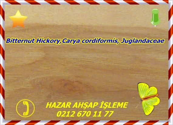 pecan (bitternut hickory) 1b s50 plh