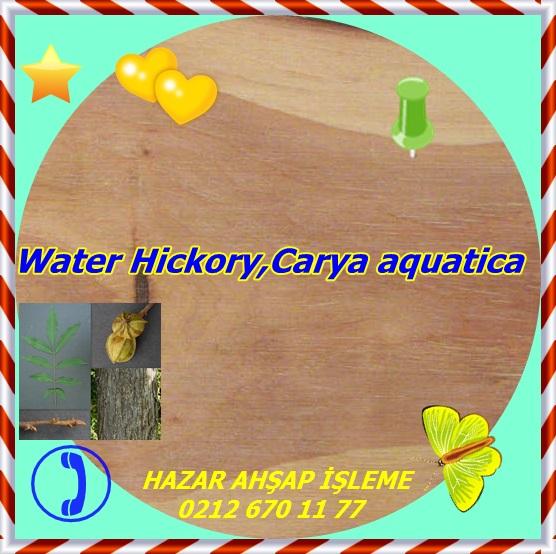 pecan (water hickory) 1b s50 plh