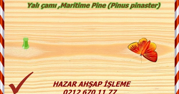 scots-pine (1)