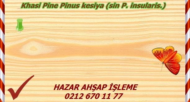 Khasi Pine Pinus kesiya (sin P. insularis.)