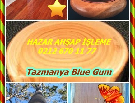 Blue Gum,Mavi Sakız, Tazmanya Blue Gum,Okaliptüs globulus