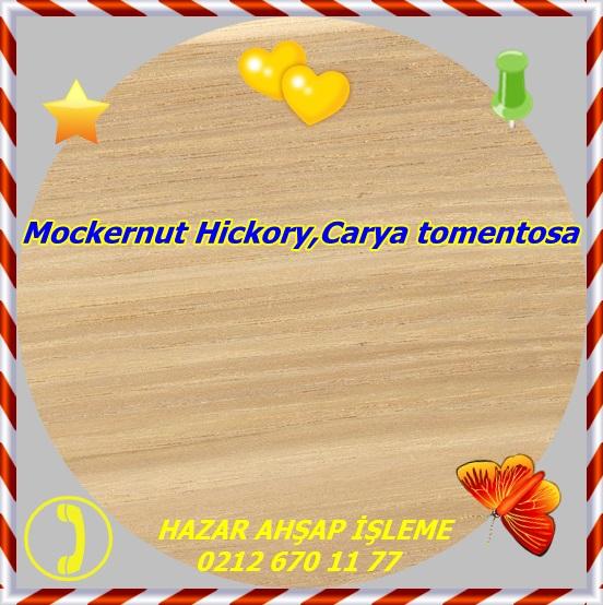 shagbark-hickory