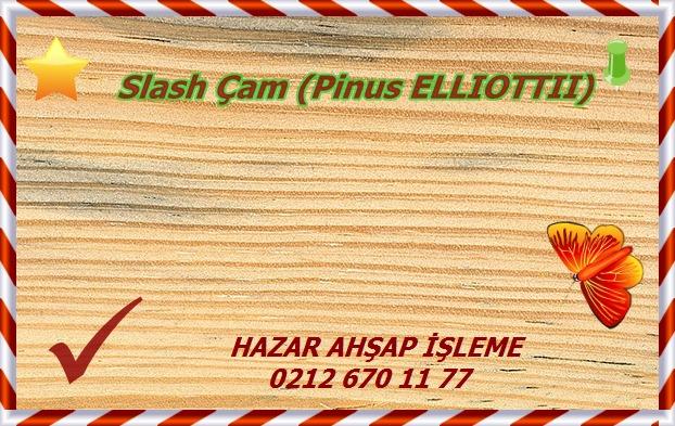 slash-pine
