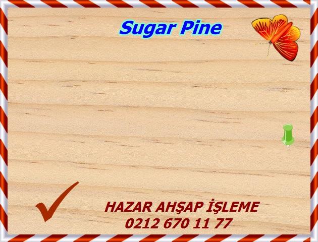 sugar-pine