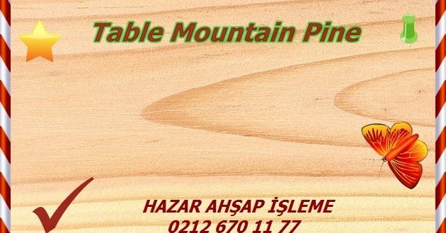 table-mountain-pine