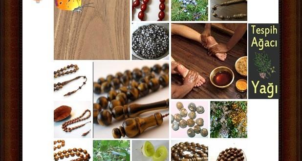 Chinaberry,(Melia azedarach),Tespih ağacı,Zamzalak,Pers lila, Chinaberry, boncuk ağaç , syringa, beyaz sedir, mwarubaini (Kiswahili), lirası (Luganda), Dwele (Luo)