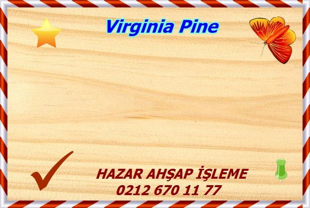 virginia-pine