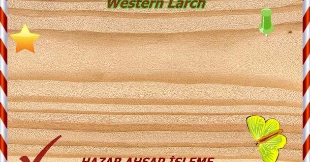 western-larch