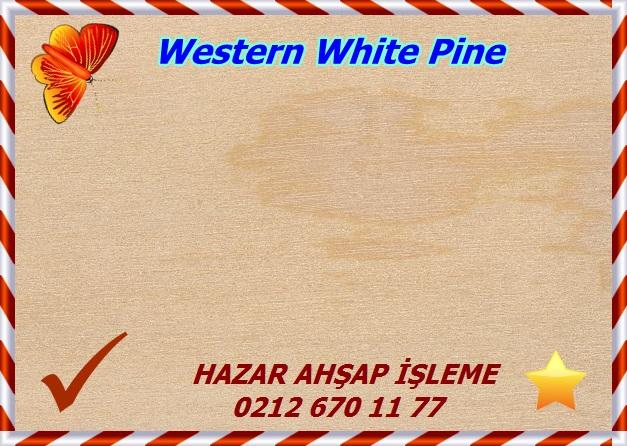 western-white-pine