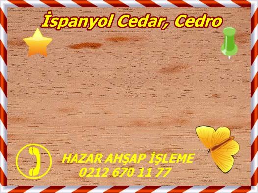 Wood surface, Spanish Cedar Wood (Cedrela odorata) full frame