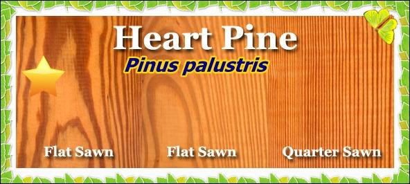yellow_heart_pine