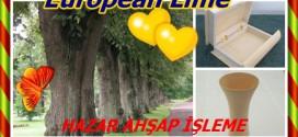 European Lime,Common Lime, Common Linden,Ihlamur