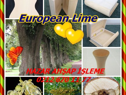 European Lime,Common Lime, Common Linden,Ihlamur
