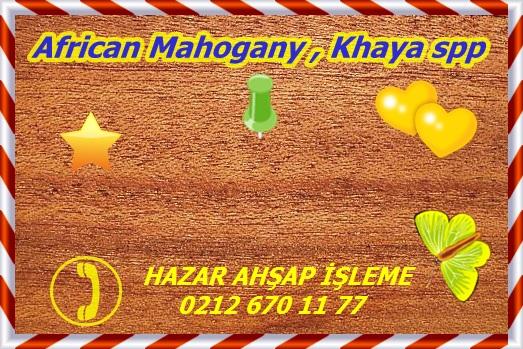 800px-Khaya-Mahagoni (1)