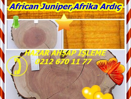 African Juniper,Afrika Ardıç , Juniperus procera
