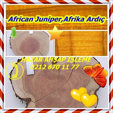 African Juniper,Afrika Ardıç