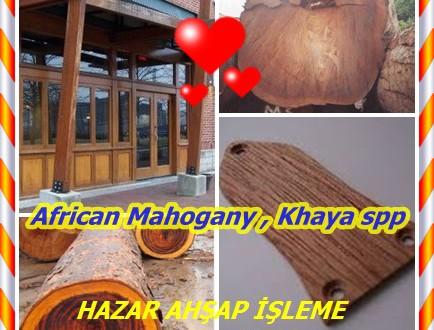 African Mahogany,Afrika Maun ,Khaya spp.Khaya anthotheca, K. grandifoliola, K. ivorensis, K. senegalensis
