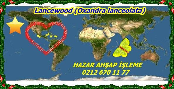 Lancewood (Oxandra lanceolata)pp