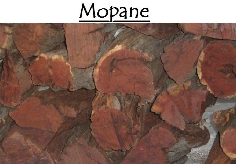 Mopane_Hardwood